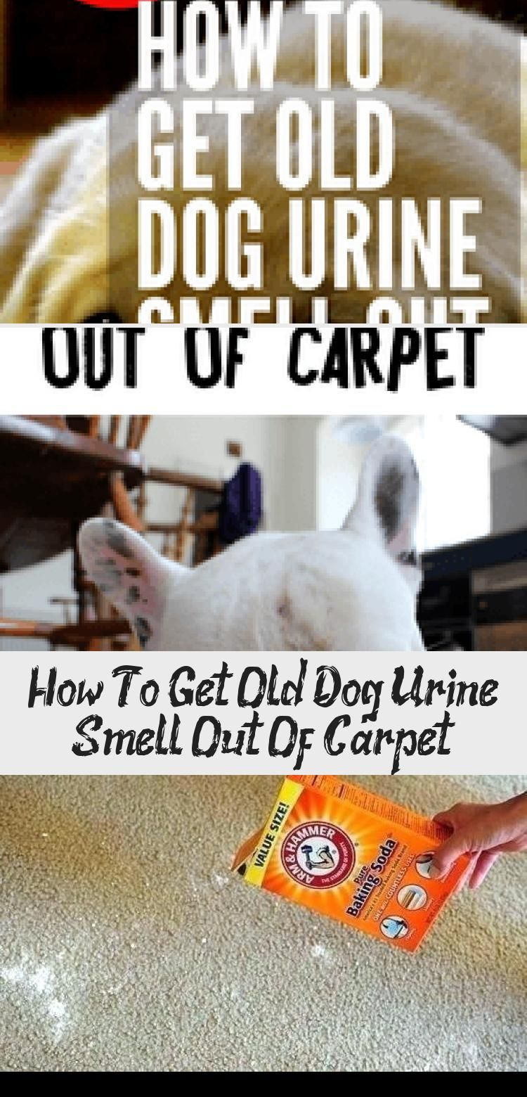 How To Get Old Dog Pee Smell Out Of Carpet Whole House Smell Like