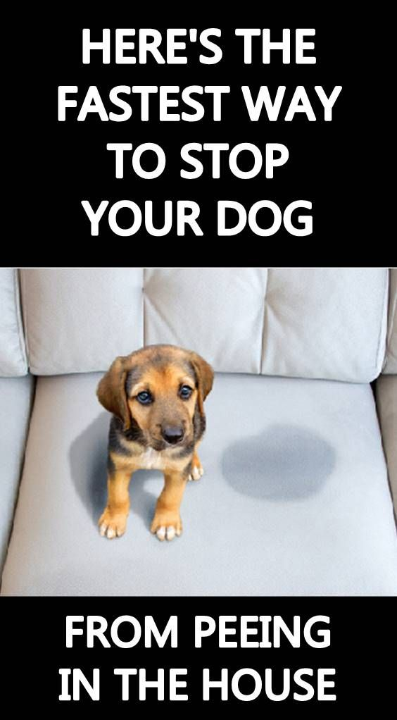 Pin By Mary Mcgaughy On Animal Care Facts Dogs Dog Pee Dogs