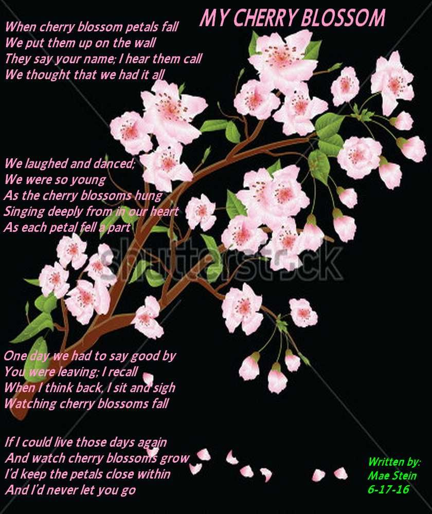 My Cherry Blossoms Nature Poems Nature Poem Cherry Blossom Blossom