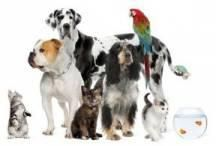 Established since 1999 Pet Shoppers Online Pet Shop is based in the heart of Ormskirk Lancashire UK is able to satisfy all the needs of the discerning pet owner. www.pet-shopper.co.uk