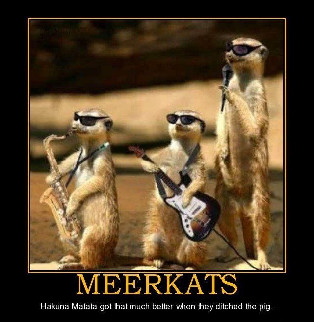 Happy Birthday Meme, Funny Animal Photos, Funny