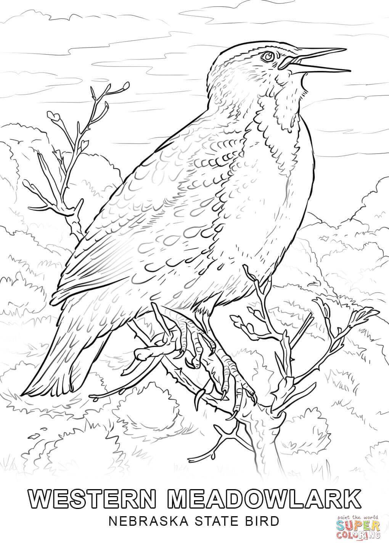 Nebraska State Bird Coloring Page Jpg 1020 1440 Bird Coloring