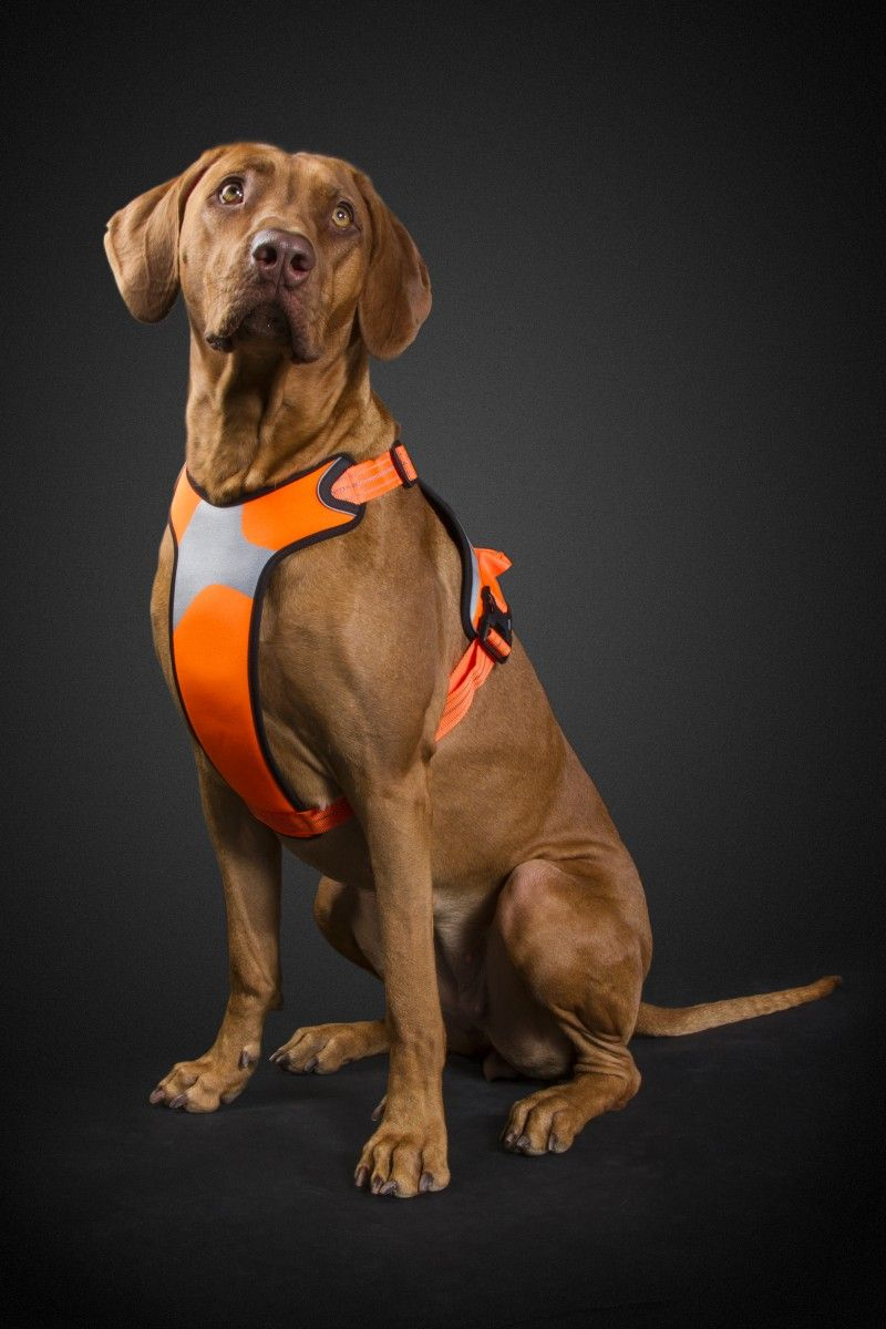 Sturdy Padded Harness For Dogs Efficient 3m Reflectors And