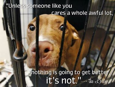 If Not You Then Who Shelter Dogs Animal Shelter Dogs