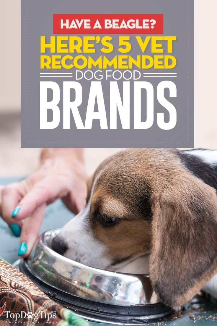 5 Vet Recommended Dog Foods For Beagles Best Dog Food Best Dog