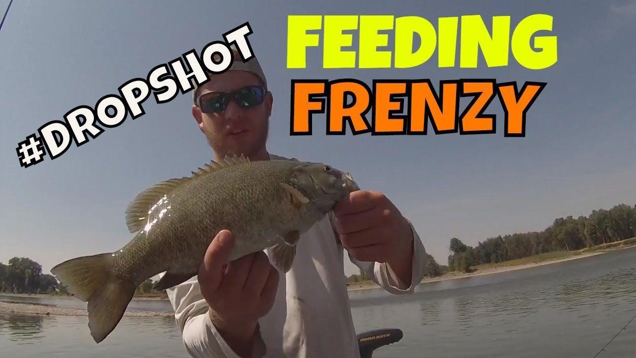Montana Bass Fishing Drop shot tips Yellowstone River