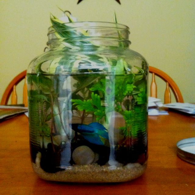 Betta world it 39 s easy just get a big jar fill bottom for Fish and more pet store