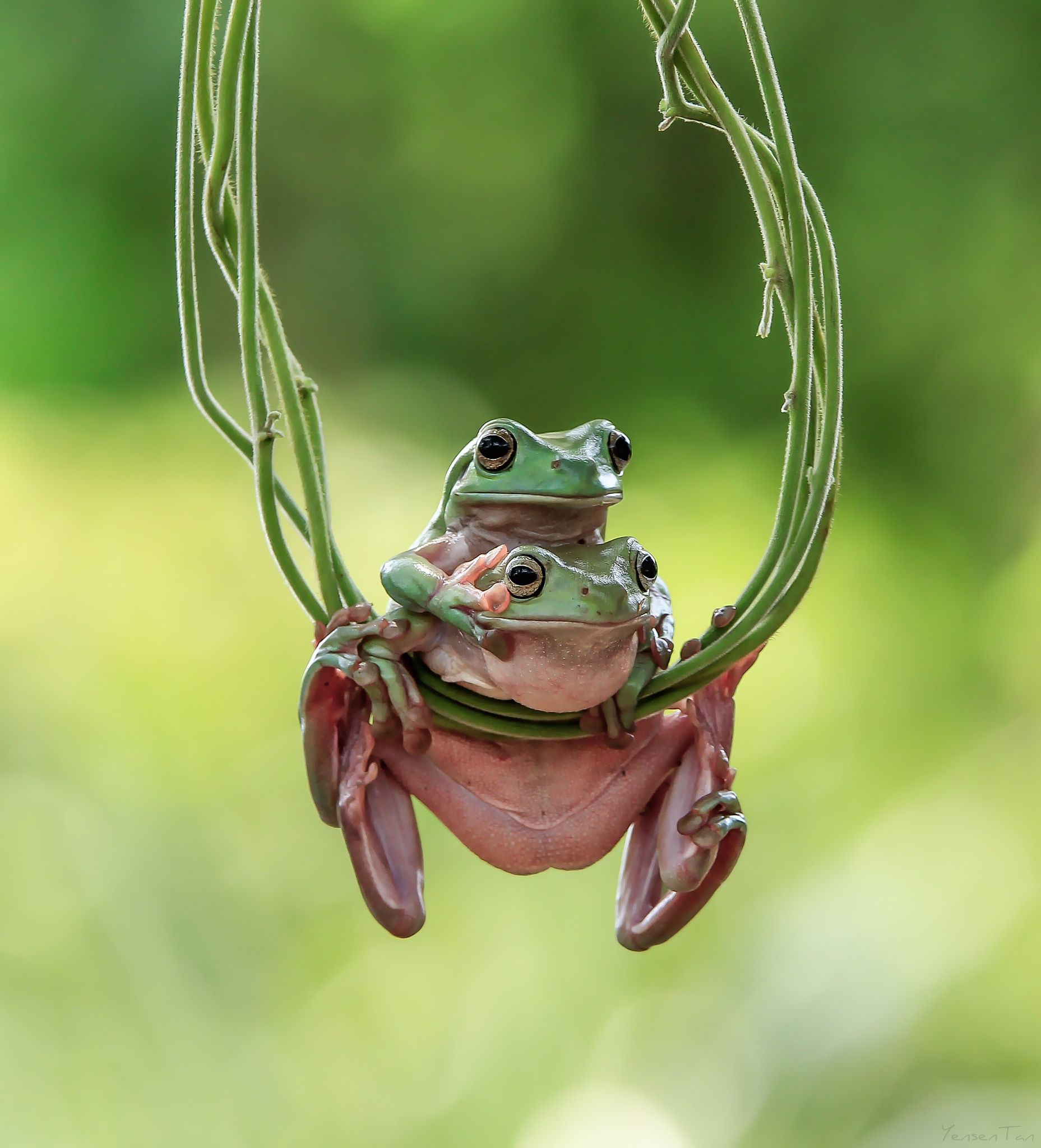 Look on there by yensen tan / 500px | Frog | Pinterest | Hongos ...
