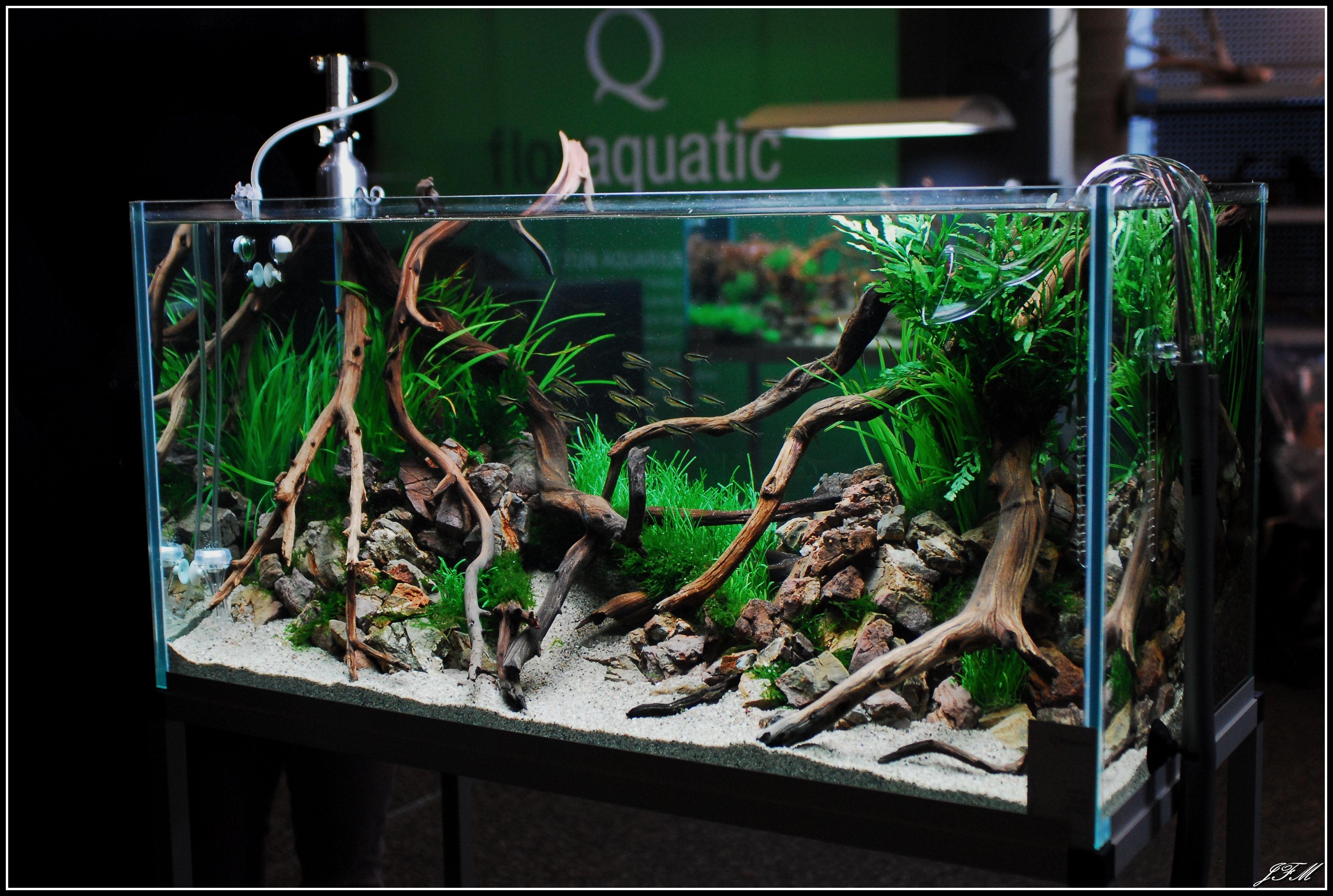 d787e389b860b5210707d4cc00dc2c0d Luxe De Crevette Aquarium Des Idées