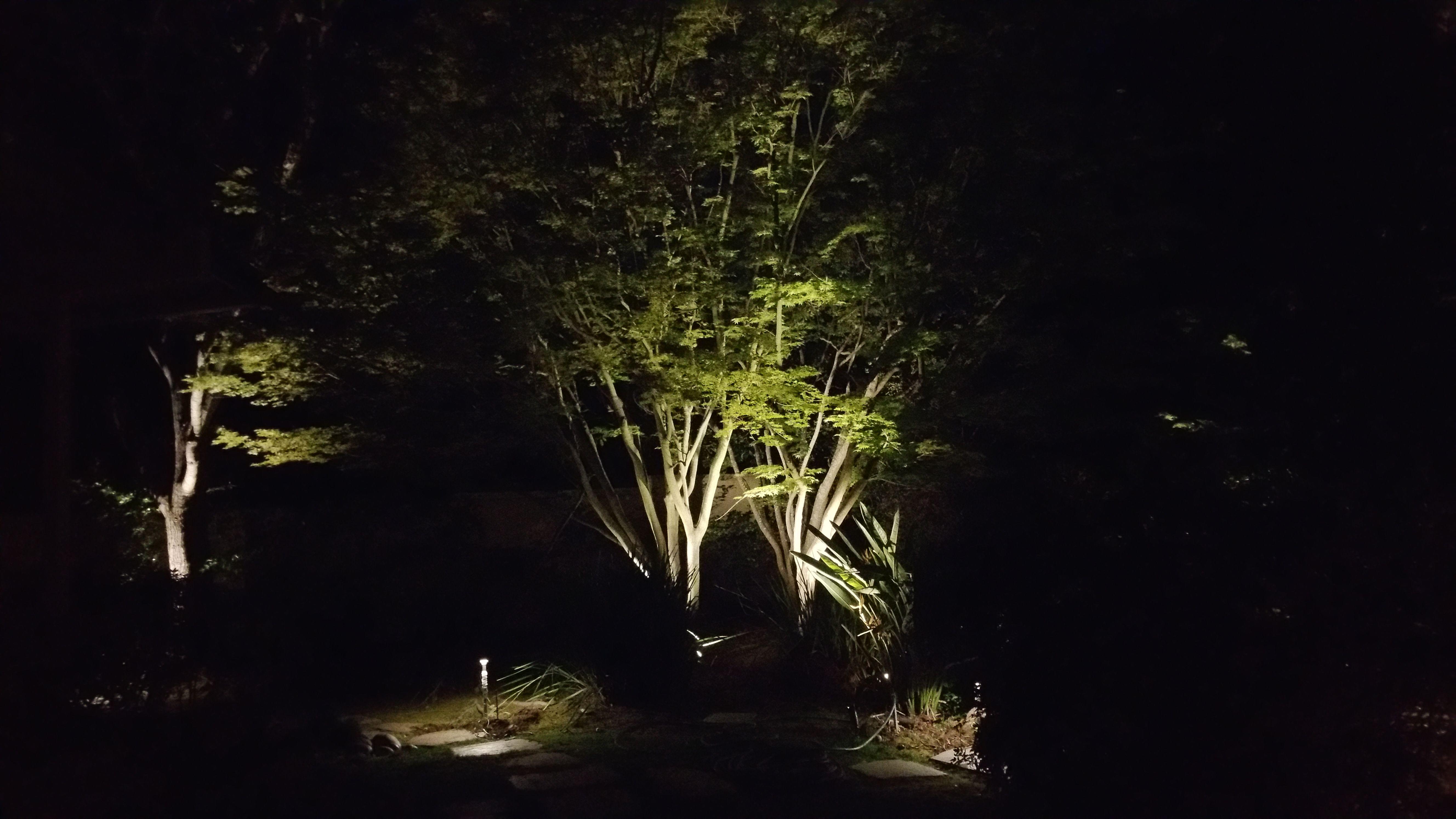 always light up a japanese maple landscape lighting pinterest