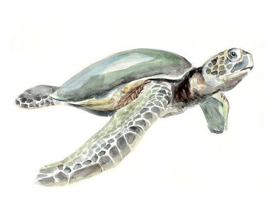 Sea turtle - animal watercolor painting - art print