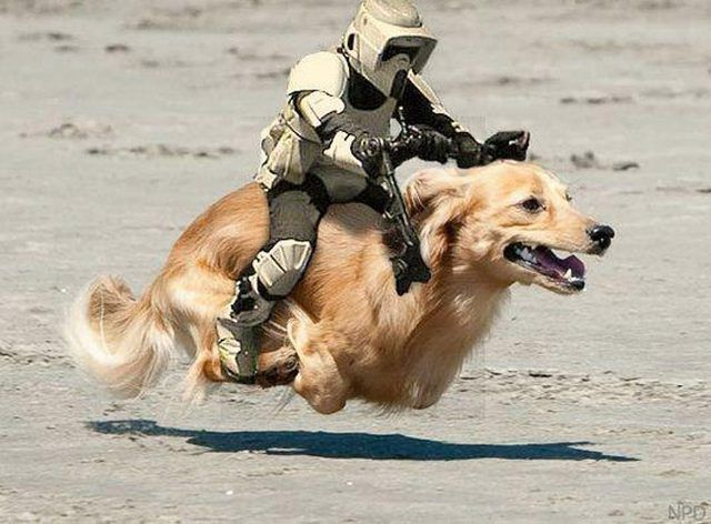Star Wars Stormpooper I Mean These Speeders Are Fast But They Definitely Can T Make The Kessel Run In Less Than 12 Parsecs War Dogs Funny Dogs Dogs
