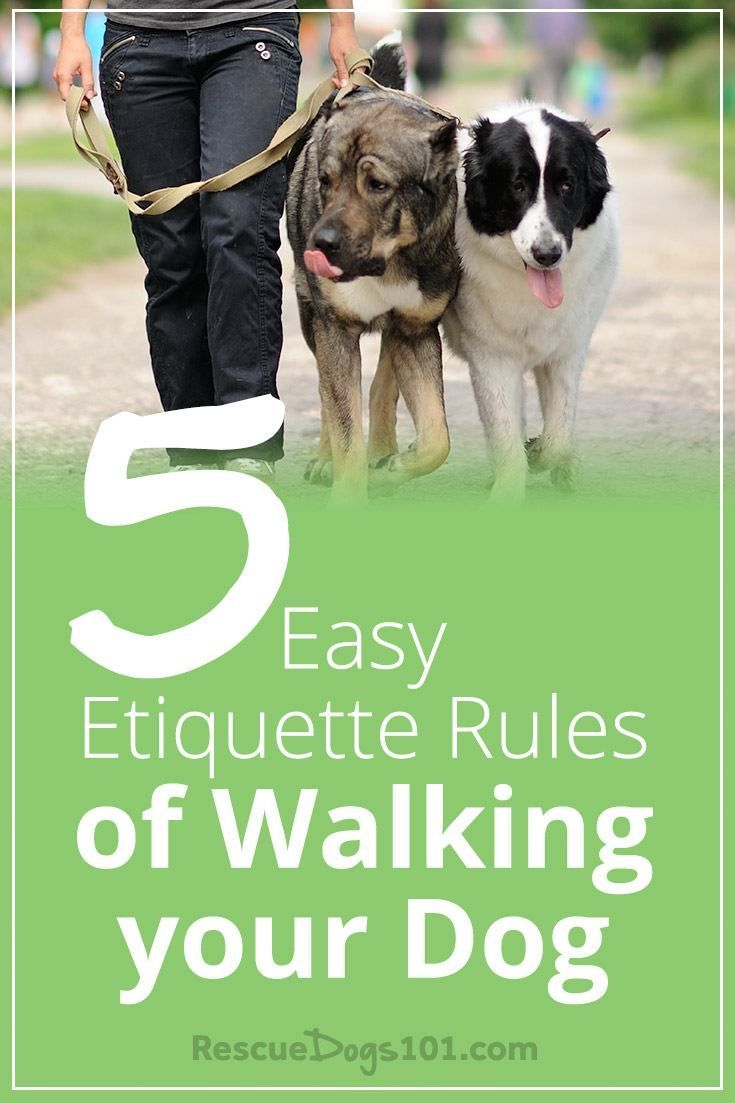 5 Rules Of Walking Your Dog Etiquette Dog Walking Dogs Dog
