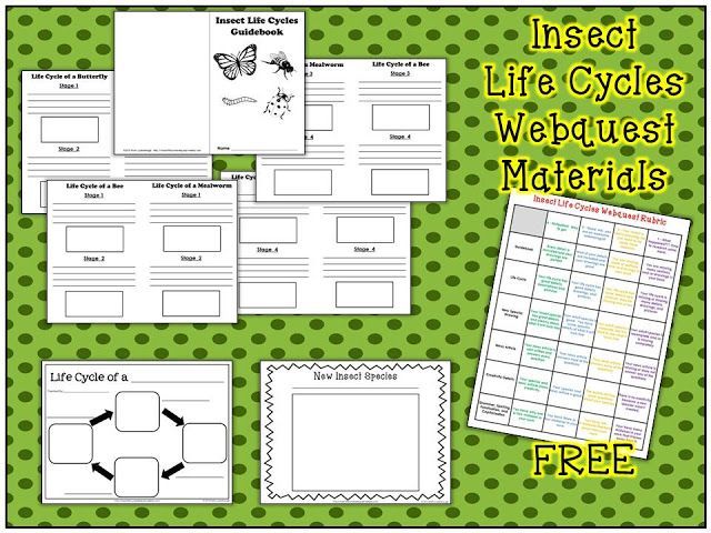 Insect Life Cycles Webquest With Free Printables Life Cycles Insect Life Cycle Education