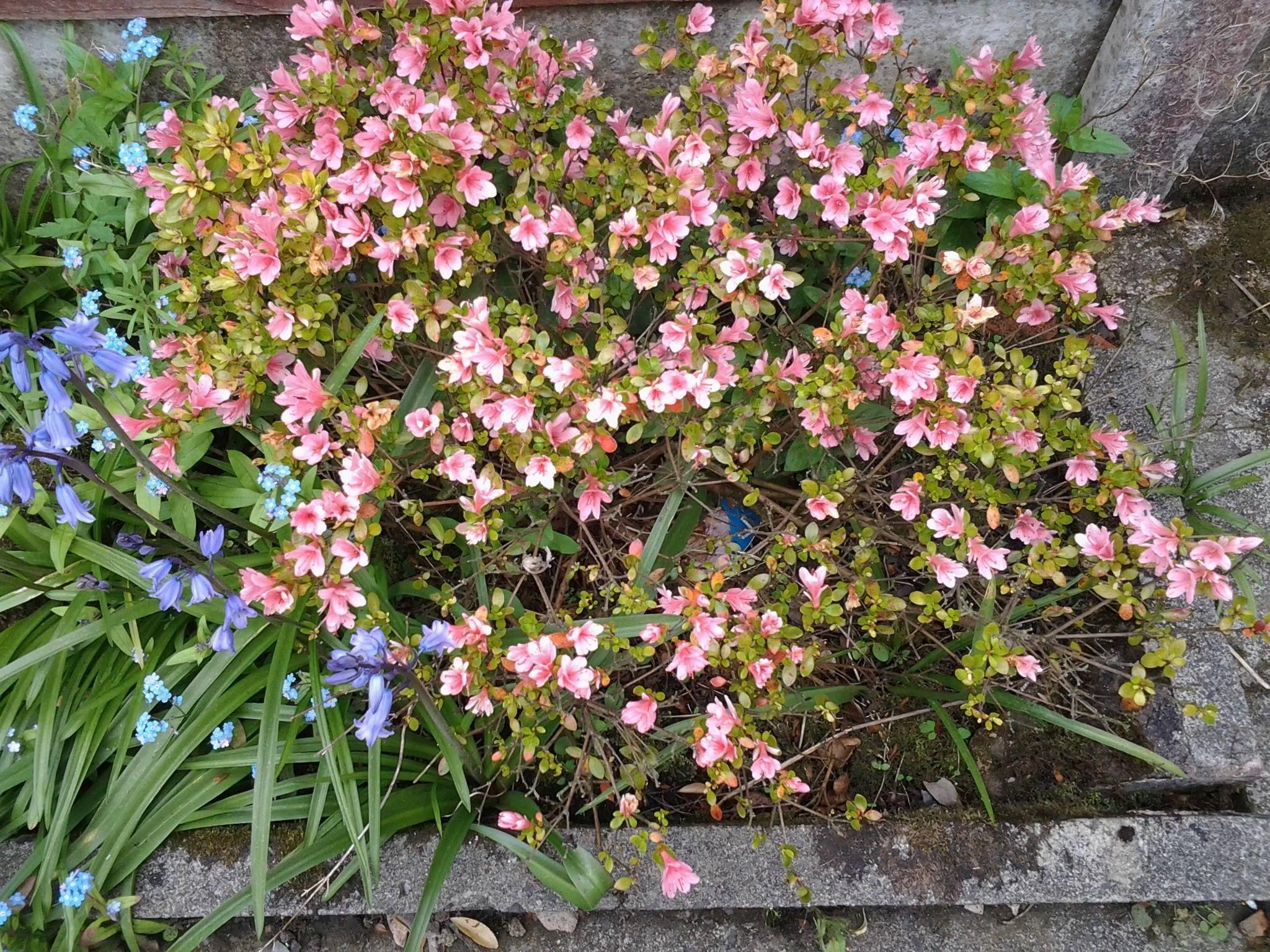 Ann-Marie Martin   Garden of Colour Competition   Pinterest   Gardens