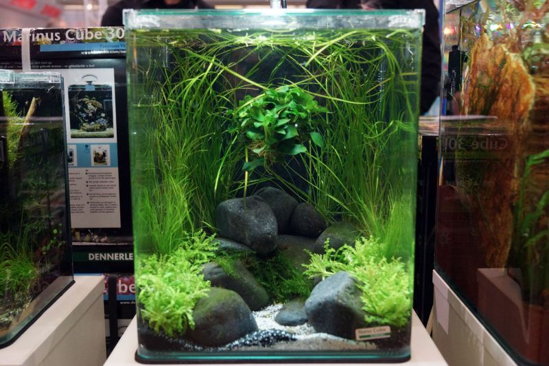 aquascaped nano cube aquarium pinterest garnelen. Black Bedroom Furniture Sets. Home Design Ideas