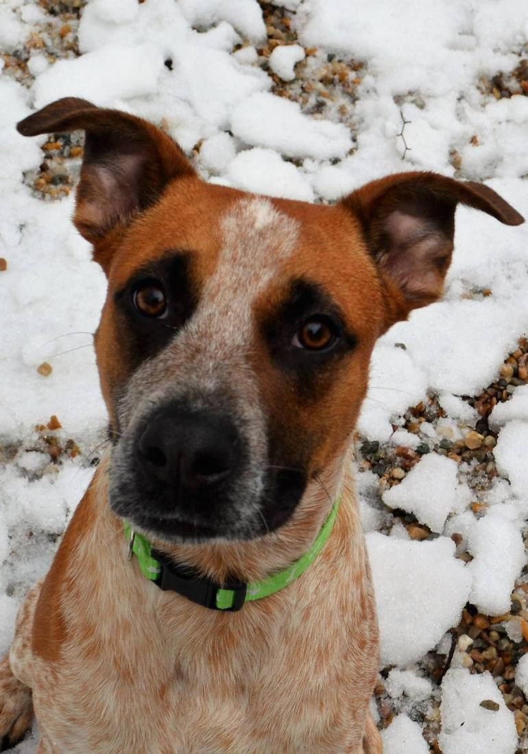 Middlebury A Middlebury Animal Shelter Is Putting Out An Urgent