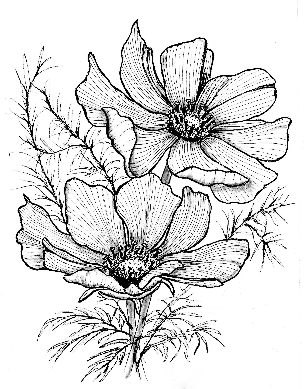 Cosmos Digital Download Printable Black Ink Flower Illustration Minimalist Botanical Print Home Decor Flower Line Drawings Flower Sketches Flower Drawing