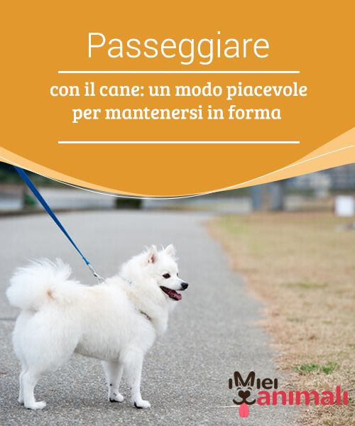 Passeggiare Con Il Cane Un Modo Piacevole Per Mantenersi In Forma