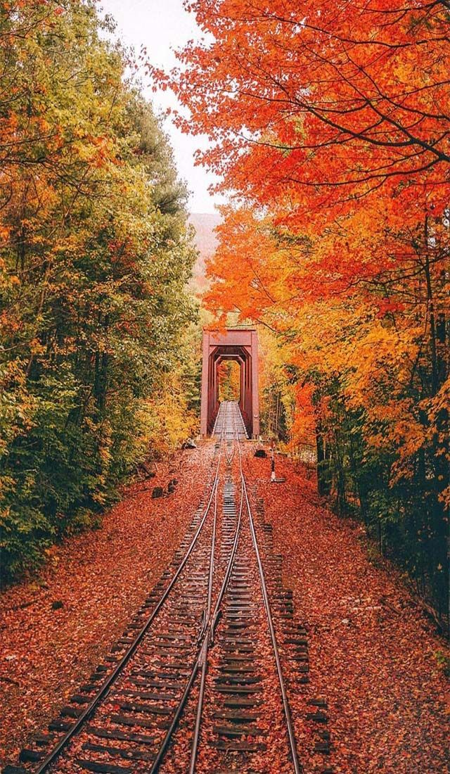 rail track of hampshire #autumnscenes