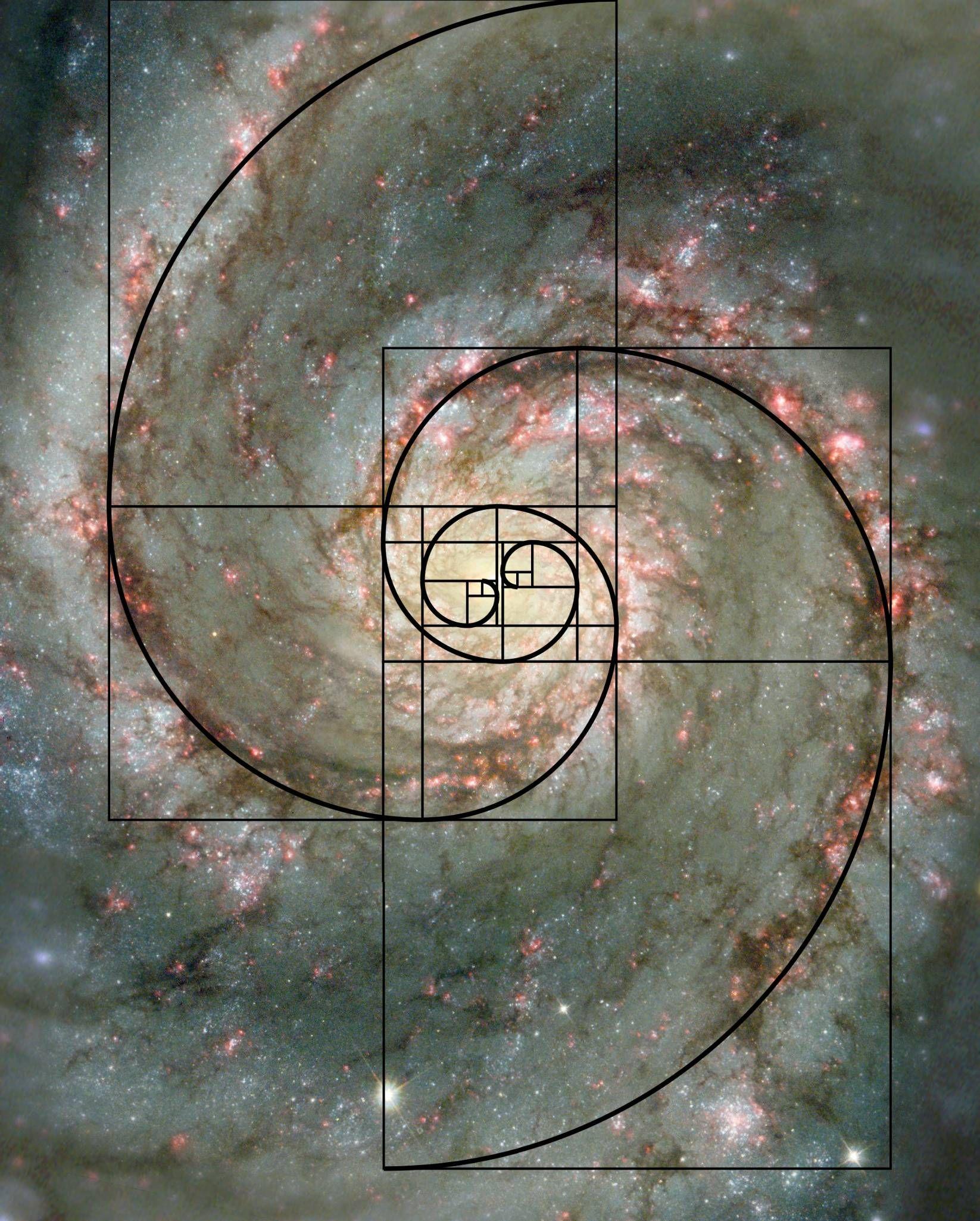 Spirituality plants universe and golden ratio for Golden ratio artwork