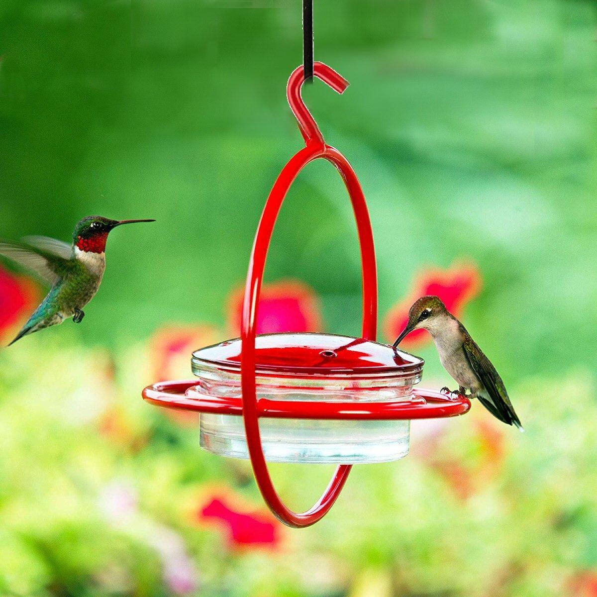 Dish Circle Hummingbird Feeder w/Perch Humming bird