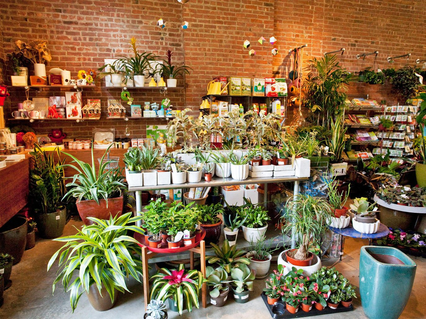 The best plant stores NYC has to offer in 2019 | Plants