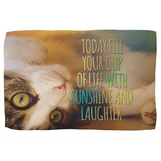 Backyard Burial Band - Fill Your Cup with Sunshine Cat ...