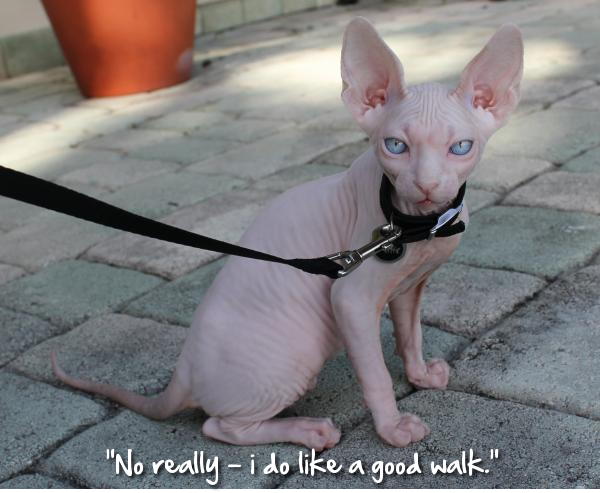 Admin's Soup of the Day! 2.17.14 http://sphynxlair.com/community/threads/admins-soup-of-the-day-2-17-14.26122/ #sphynx #sphynxcat #sphynxlair