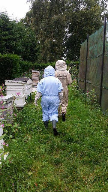 Beekeeping For Beginners Review   Apiary #beekeeping #raisebees #honeybees  #apiary #apiarist