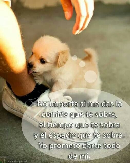 El Mejor Amigo Perros Frases Perros Y Perros Graciosos