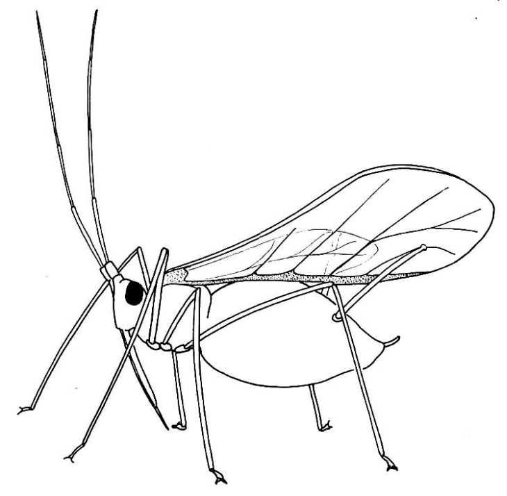 Bugs And Rodents Embroidery Patterns Insect Coloring Pages