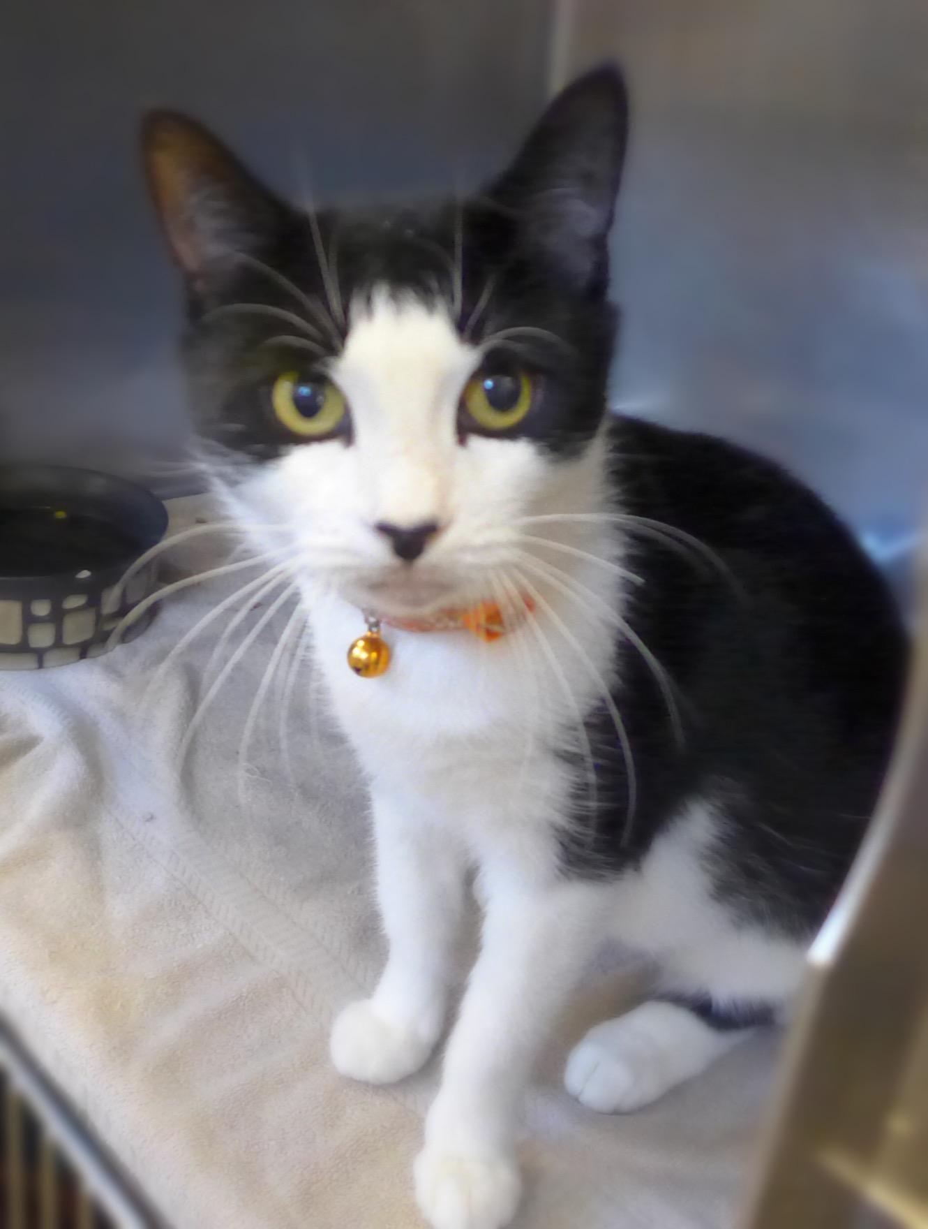 Adopt Mariah 33339063 on Petfinder Cat adoption, Kitty