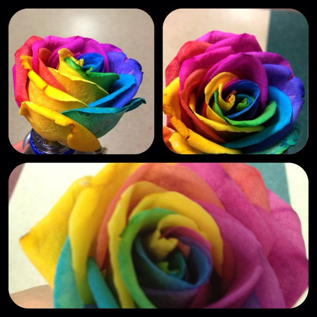 Food colored rose
