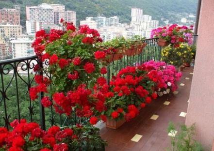 10 planting Balcony sunny ideas