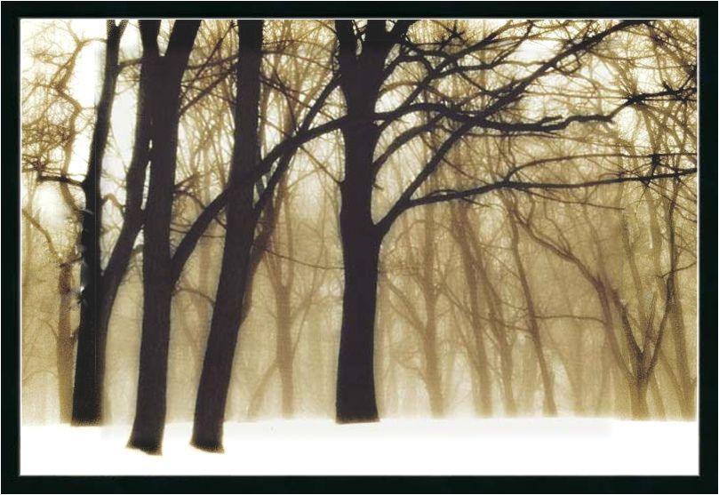"""""""Past dreams"""" (ca.2000) photographer David Lorenz Winston   par Plum leaves"""