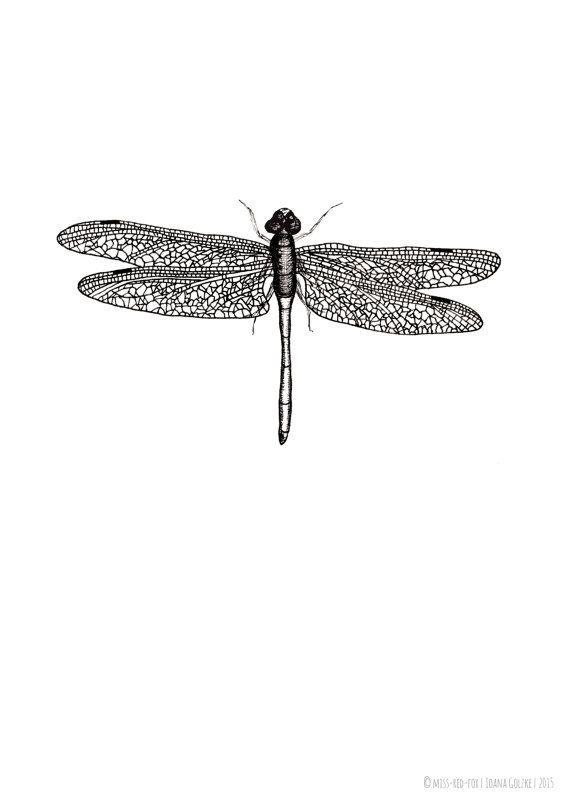 Dragonfly poster print black white by missredfox on etsy
