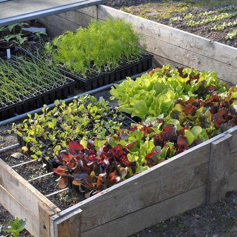 Fr hbeet pflanzen garten pinterest - Schrebergarten anlegen ...