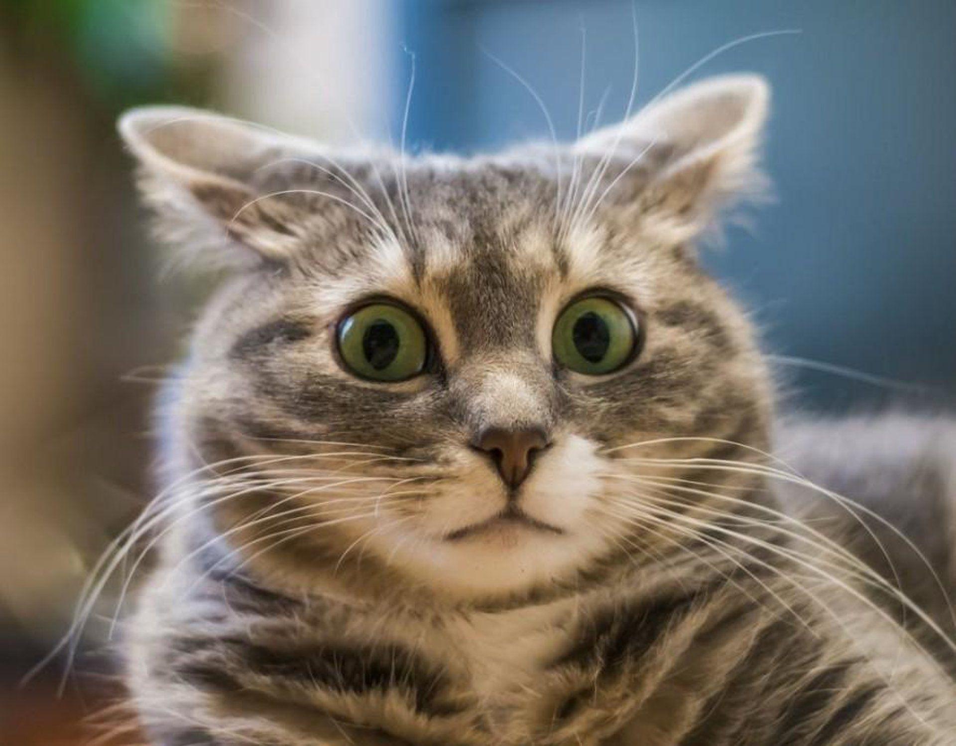 Смотреть картинки смешных котиков