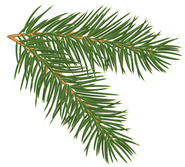 Pine Branch Png Clip Art Image Pine Branch Tree Images Branch Drawing