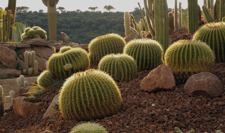 Planes de verano en la ciudad desert city el nuevo jard n de cactus de madrid lugares del - Jardin de cactus madrid ...