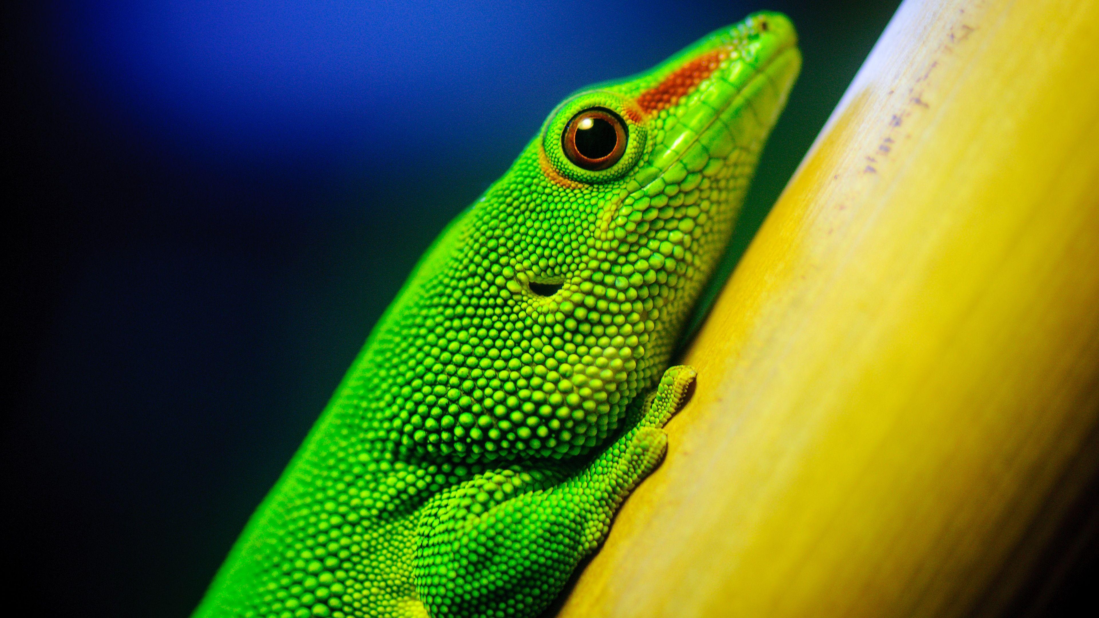 Ultra HD Wallpaper, flower 4K | Little Green Lizard 4K ...