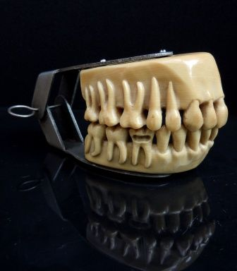 Antique demonstration ivorine teeth made by Lee S. Smith & Son Co, Pittsburgh, USA 1910