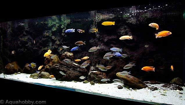 Setting up a diy aquarium background aquarium diy for Fish tank background ideas