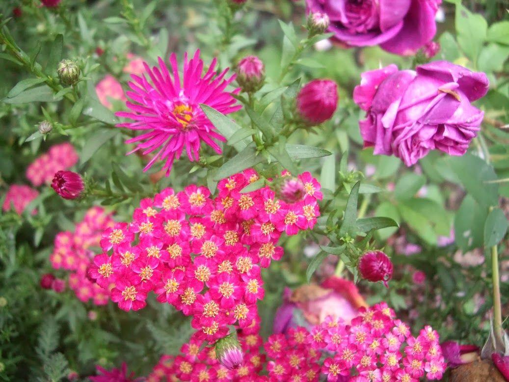 Derrière les murs de mon jardin: Rétrospective d\'août-septembre ...