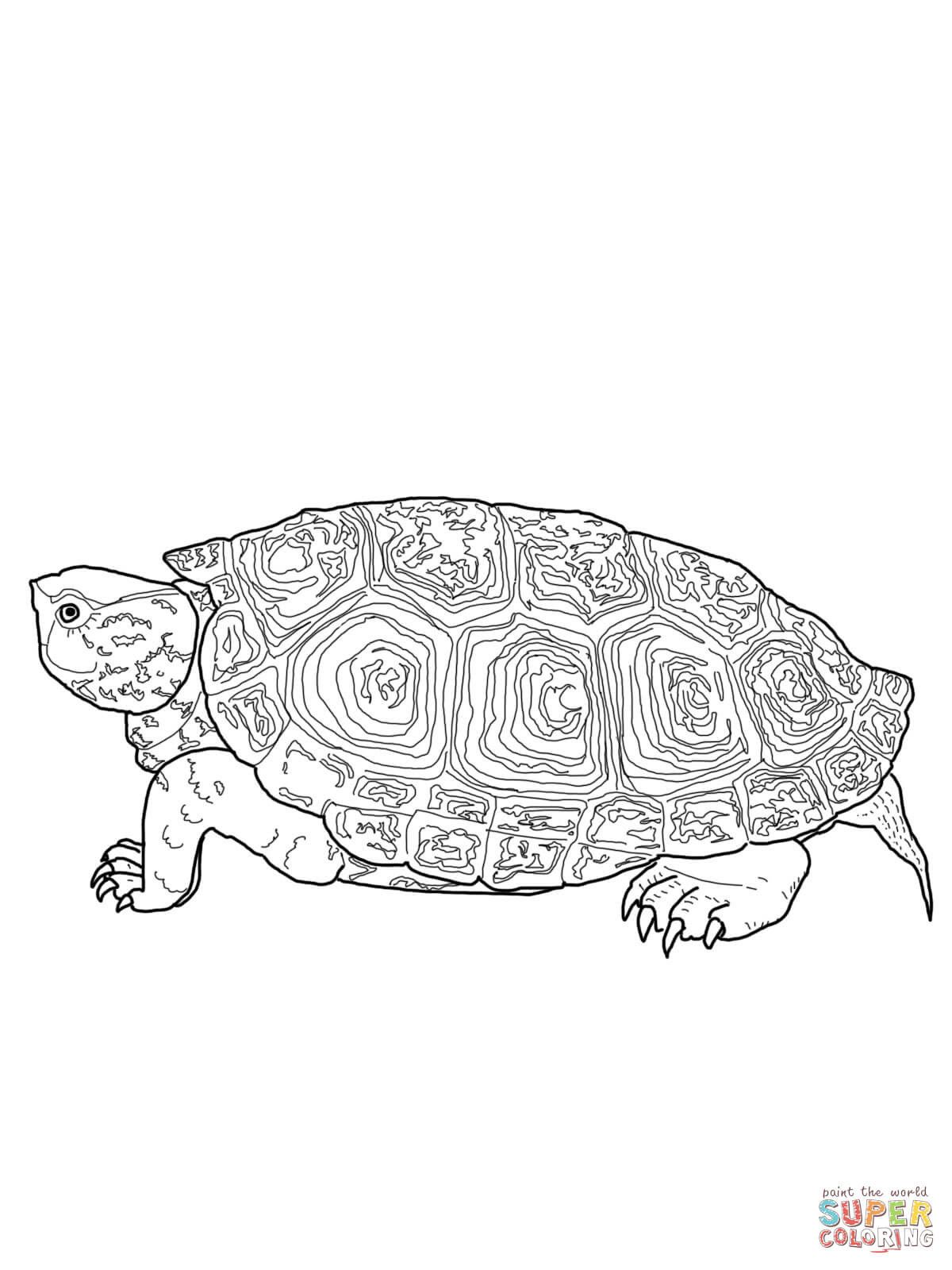 Snapping Turtle Coloring Page Youngandtae Com Turtle Coloring Pages Tortoise Drawing Animal Coloring Pages