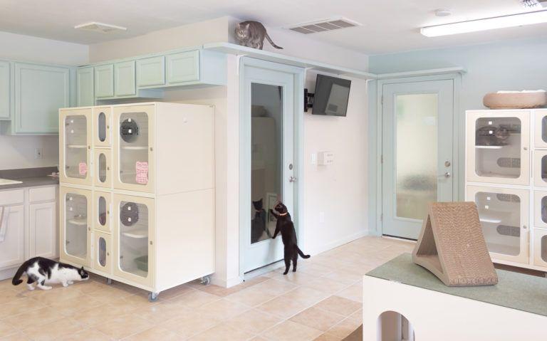 10+ Companion animal medical center ideas in 2021