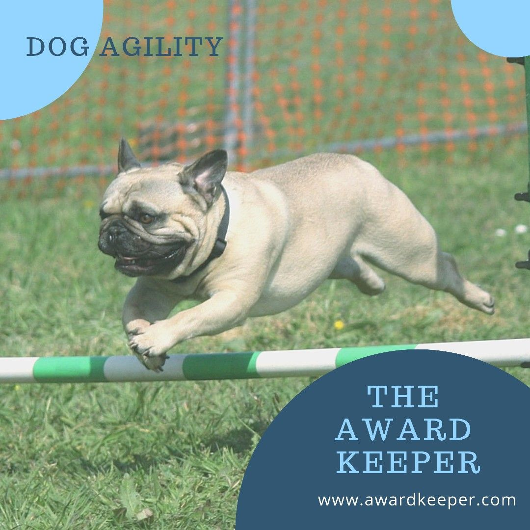 As Your Dog Goes For The Gold Grab An Award Keeper For All Of