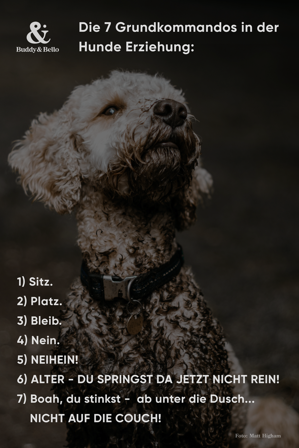 Hundespruche Buddy Bello In 2020 Hundeausbildung Hundespruche Hunde