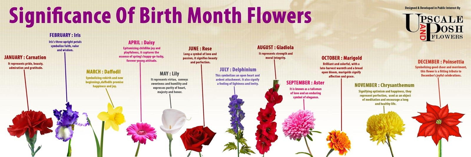 Each Month Encompasses A Flower That Symbolizes The Month Of Somebody 39 S Birth The Characteri Birth Month Flowers April Birth Flower February Birth Flowers